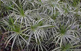 Семейство Осоковых растений: список, описание, роды и виды