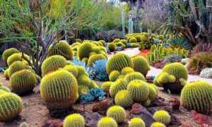 Интересные факты о кактусах: описание роста, виды