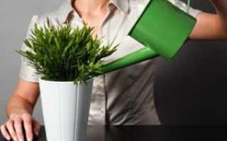 Как поливать цветы – когда поливать и чем.