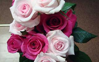 Как ухаживать за цветами в букете