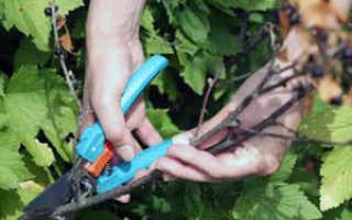 Обрезка растений – зачем обрезать растения, нужно ли обрезать