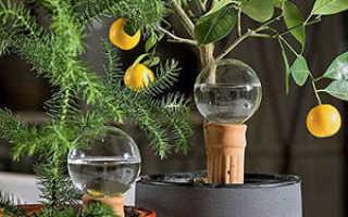 Уход за комнатными растениями, когда никого нет дома: полив, температура, подкормка