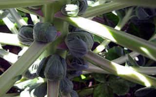 Побеговые растения: названия, фото, выращивание