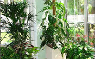 Информация О комнатных растениях