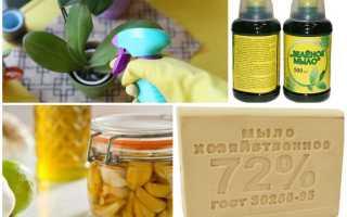 Щитовка на комнатных растениях: как бороться на орхидее и лимоне, препараты