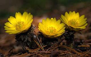 Семейство Ночецветных растений: список, описание, роды и виды