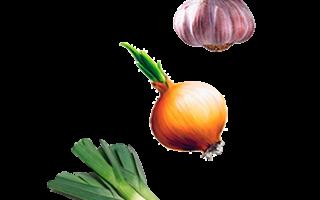 Луковичные овощные растения – названия и фото