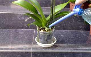 О поливе орхидей – погружением, нижний полив