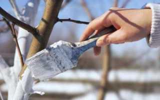 Плодовые деревья – посадка и уход, выращивание ягодных кустов в саду