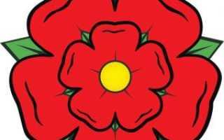 Розы на гербе, на флаге, в библии и на монетах. Факты о розе.