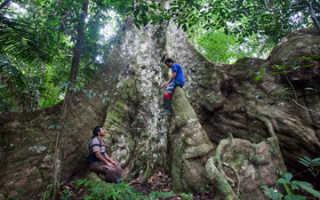 Семейство Сумаховых растений: список, описание, роды и виды