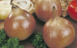 Все луковичные и многолетники по лучшей цене – осенняя распродажа на Флориум!