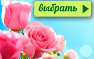 Семейство Бересклетовых растений: список, описание, роды и виды