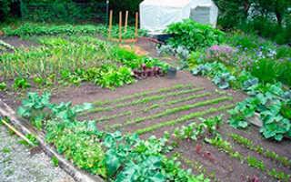 Что посадить в огороде в июне, подкормки и обработка культур