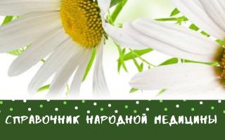 Цветок тысячелистник: полезные свойства и противопоказания, посадка и уход