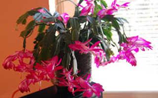 Уход за комнатными растениями зимой: полив, подкормка, подсвечивание и температур