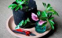 Как правильно размножать растения