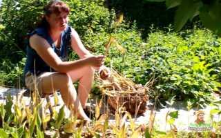 Выкапывания тюльпанов – когда и как выкапывать