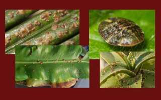 Вредители растений: защита, борьба, обработка