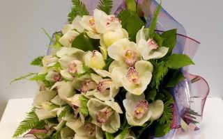 Интересные факты об Орхидее