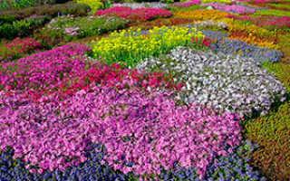 Почвопокровные растения: виды, выращивание, уход