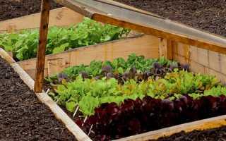 Названия и фото зеленных растений, которые можно вырастить на огороде и в домашних условиях