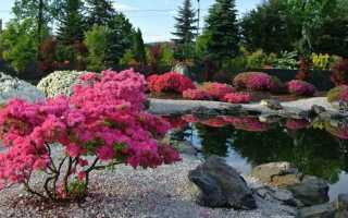 Декоративные кустарники: цветущие и вечнозеленые, названия и фото, посадка и уход