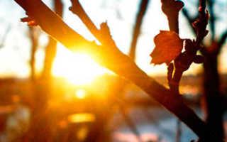 Семейство Крыжовниковых растений: список, описание, роды и виды