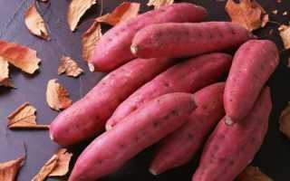 Батат (сладкий картофель): посадка и уход в открытом грунте, фото, выращивание из семян