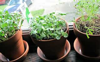 Стеблевые растения: названия, фото, выращивание