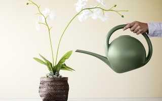 Как поливать орхидею – верхний и нижний полив орхидеи, погружение и частота поливов