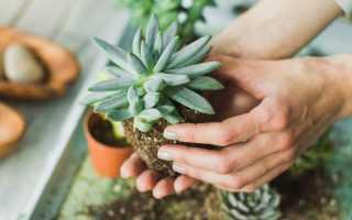 Суккуленты – названия и фото, особенности выращивания