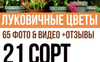 Луковичные цветы: названия и фото, комнатные и садовые луковичные растения