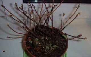 Почему опадают листья у комнатных растений – что делать, если листья у цветов опадают