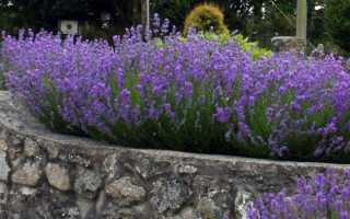 Дикие цветы в саду