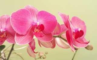 Домашние орхидеи – список видов, особенности ухода, названия и фото