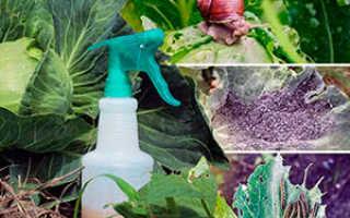 Как защитить растения от болезней и вредителей без применения ядохимикатов