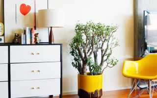 Неприхотливые комнатные растения, или цветы для ленивых – список