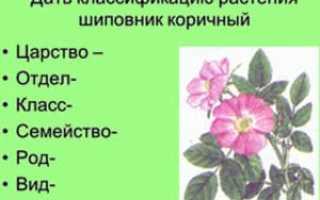 Латинские и русские названия комнатных растений