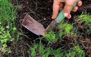Почва для растений – субстраты, смеси, компоненты. Как составить субстрат для цветов