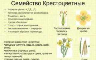 Семейство Крестоцветных растений: список, описание, роды и виды