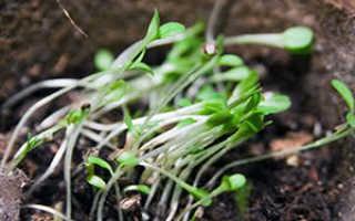 Выращивание рассады овощей, посев семян на рассаду в январе, феврале, марте и апреле