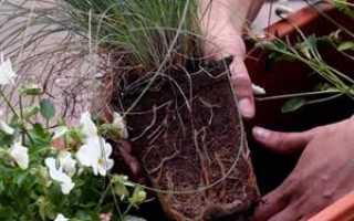 Пересадка цветов – зачем, когда и как пересаживать; перевалка комнатных растений