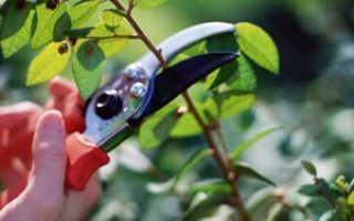 Обрезка растений – как обрезать цветы правильно, правила обрезки