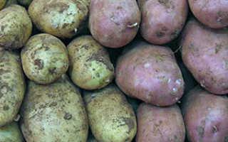 Информация о картофеле: посадка, уход, обработка, хранение