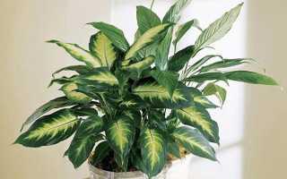 Растения, о которых есть суеверия: как выращивать такие растения и стоит ли вообще это делать.