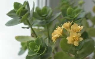 Список вредителей комнатных растений: борьба и профилактика