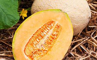 Фрукт дыня: выращивание из семян, фото, уход и посев на рассаду и в открытый грунт