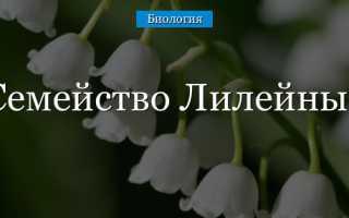 Семейство Лилейные – особенности ухода, растения семейства