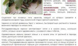 О черенковании комнатных растений – примеры размножения черенками
